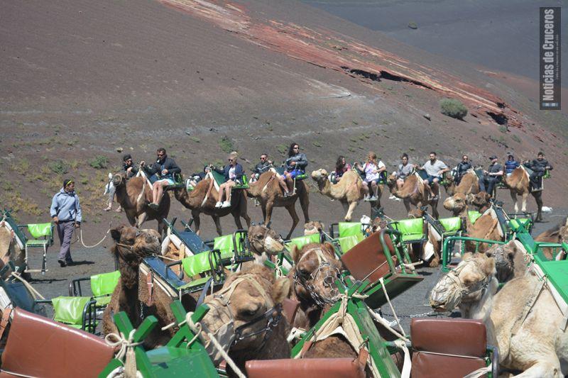 caravana de dromedarios en la ruta a Timanfaya