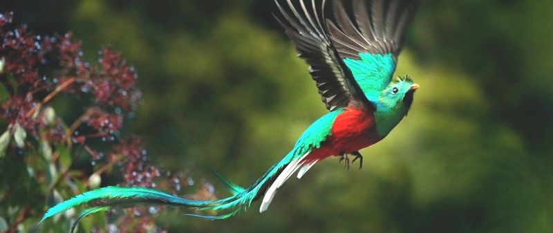 América Latina y Europa Meridional - Quetzal