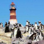 Pingüinos en la Isla Pingüino, Puerto Deseado, Argentina.