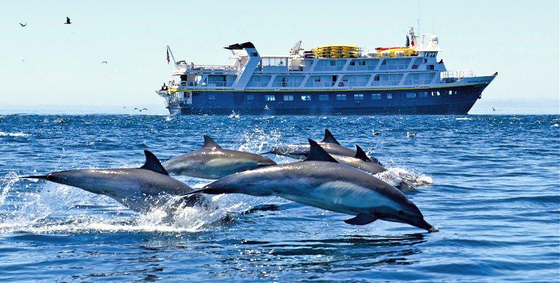 Coronavirus - Lindblad Expeditions - Sea Lion